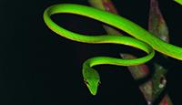 Science: 200'000 espèces venimeuses, parfois capables de tuer, peuvent aussi sauver des vies.
