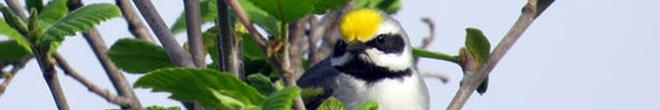 Nature. Les oiseaux entendent les tornades avant tout le monde.