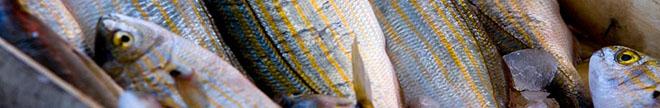 Health. Slow fish: Mangeons moins de poisson