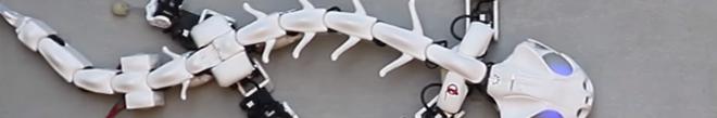NewTech. Un robot imite les mouvements des vertébrés
